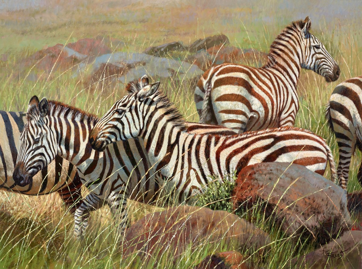 Zebras, Maasai Mara III by tony forrest -  sized 24x18 inches. Available from Whitewall Galleries